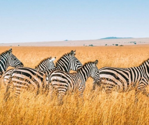 Top Highlights of Kenya